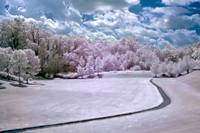 Infrared Meadow
