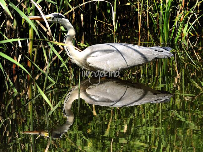 Heron andReflection