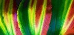 Colorful Macro Leaf Abstract