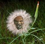 "The Exalted ""God of Weeds"""
