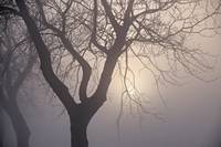 Tree silhouette against hazy dawn