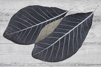 Two black leaves