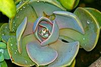 Succulent Plants with water droplet