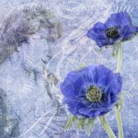 Anemone: freedom and unfading love