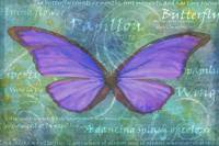 The violet butterfly