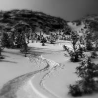 """Fresh Tracks"" by chrisromano"