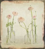 Persian buttercups in vintage glass bottles
