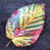 Colorful leaf on treetrunk macro