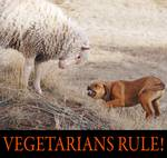 vegetarians rule--my lamb and dog Posters