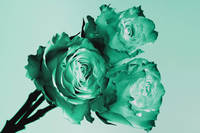 Mint Rose Trio