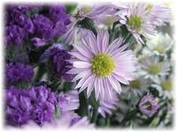 Asters and Statice by Giorgetta Bell McRee