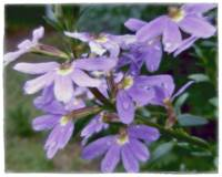 Purple Grace by Giorgetta Bell McRee