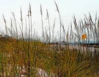 Ocean Beach Grasses & Yellow Warning Flag