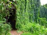 Vine Tunnel