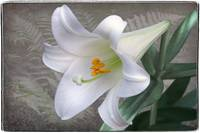 Easter Lily by Giorgetta Bell McRee