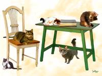 5 Cats, a Chair and a Table
