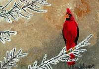 Cardinal Bird In Winter