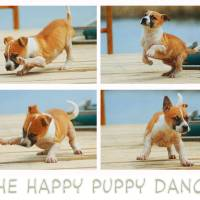 the happy puppy dance by r christopher vest