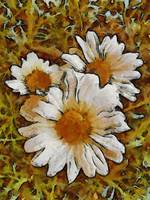 Daisies Three