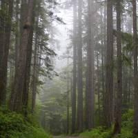 Forest Road by Roger Dullinger