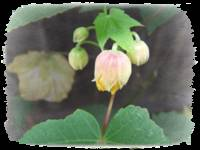 Chinese Lantern Buds by Giorgetta Bell McRee