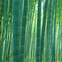 """Japan, Bamboo Forest"" by IK_Stores"