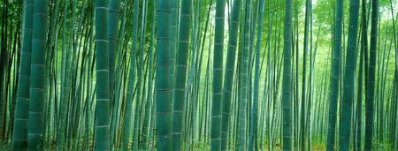 Example of Japan, Bamboo Forest skyline in perspective on angled canvas