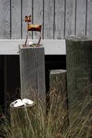 Cherry Grove Still Life