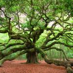 """Angel Oak"" by kenrainwaterphotography"