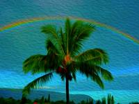 Peter the palm's rainbow