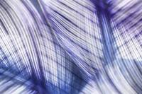 Nature Leaves Abstract in Blue and Purple