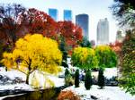 Winter Autumn in Central Park