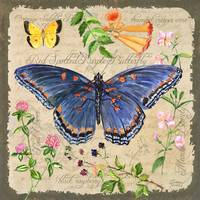 Blue Butterfly by Sharon Himes