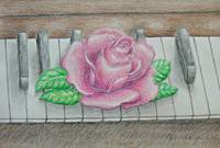 pink rose on piano key