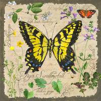 Yellow Butterfly by Sharon Himes