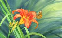 Tiger Lily and Butterfly by Sharon Himes