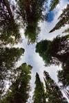 "Colorado Rocky Mountain Forest Sky by James ""BO"" Insogna"