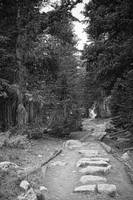 Rocky Mountain Forest Path BW