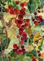 Blushing Grapes by Sharon Himes
