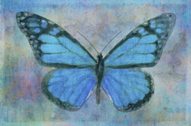 Butterfly in blue