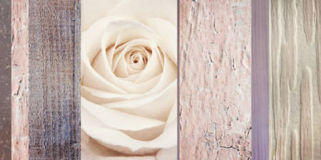 Ivory & Mauve Rose Collage