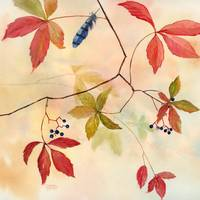 Vine & Feather by Sharon Himes