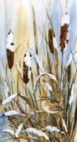Winter Wren by Sharon Himes