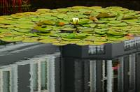 Reflections On A Lily Pond #1