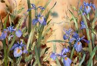 Riverside Wild Iris by Sharon Himes
