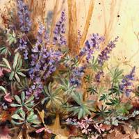 Wild Blue Lupine by Sharon Himes