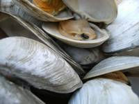 'Clam Supper'