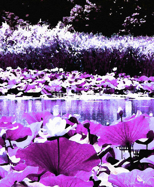 White Water Lotus in Violet