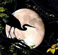 Blue Moon and Blue Heron