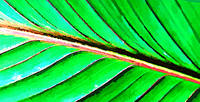 Macro Leaf Abstract